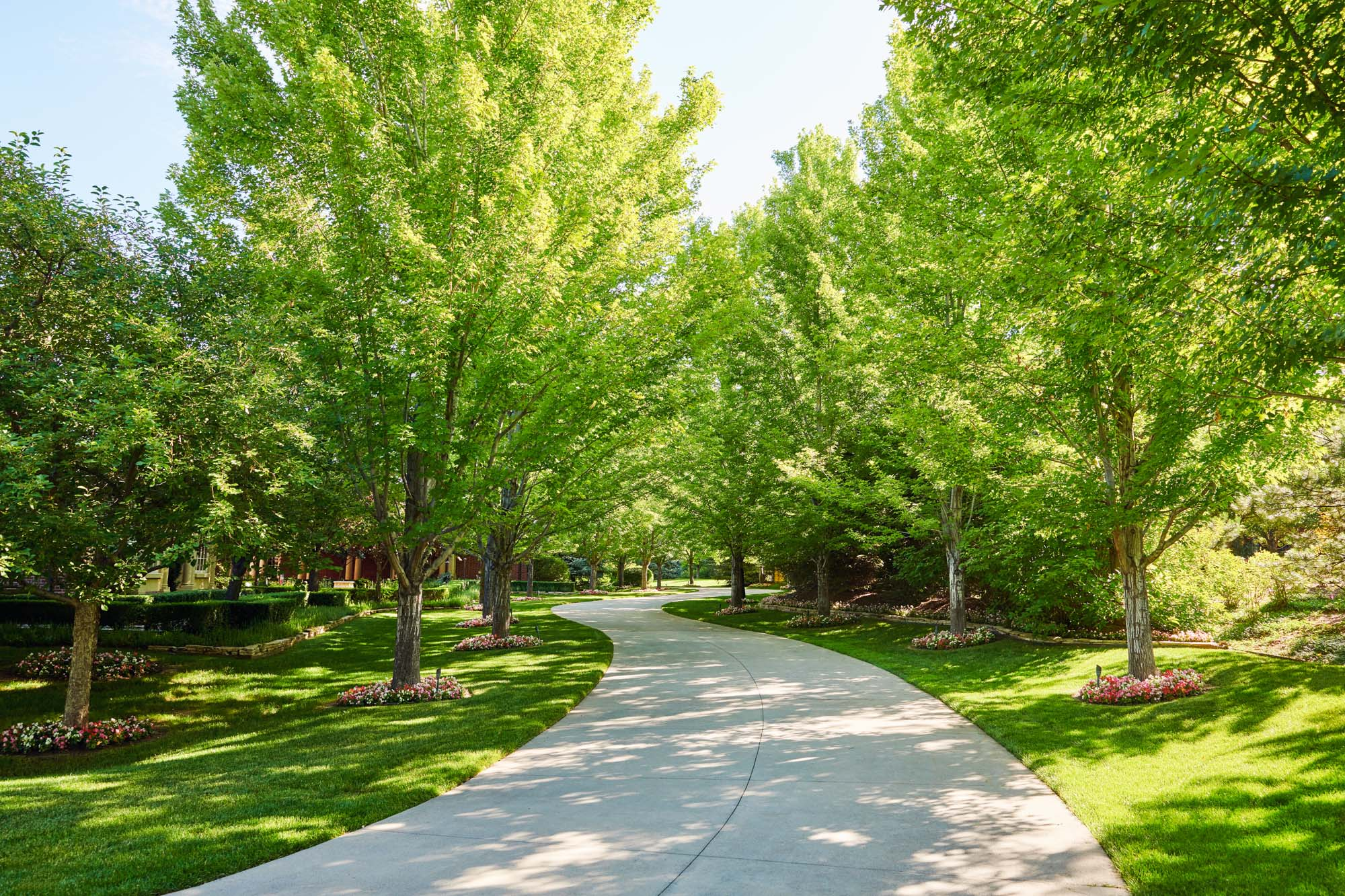 Here are a few tips on how to take care of your trees